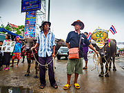 04 OCTOBER 2017 - CHONBURI, CHONBURI, THAILAND: Farmers watch the parade with their water buffalo before the races. Contestants race water buffalo about 100 meters down a muddy straight away. The buffalo races in Chonburi first took place in 1912 for Thai King Rama VI. Now the races have evolved into a festival that marks the end of Buddhist Lent and is held on the first full moon of the 11th lunar month (either October or November). Thousands of people come to Chonburi, about 90 minutes from Bangkok, for the races and carnival midway.   PHOTO BY JACK KURTZ