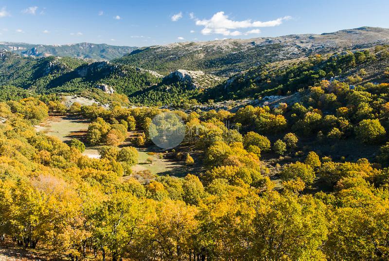 Robledal (Quercus pyrenaica).Cotillas Calar del Mundo.Parque Natural de los Calares del Mundo y de La Sima. Albacete. ©Antonio Real Hurtado / PILAR REVILLA
