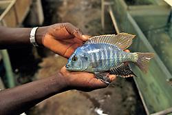 Man Holding Fish At Fish Farm