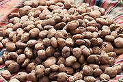 Bolivia June 2013. Altiplano. Viacha. Potato harvest on a piece of typical cloth.