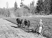 9969-2861. Plowing on the William Fisher farm, Rt. 1, Box 120, Tigard. The boy is James Fisher. February 23, 1937.