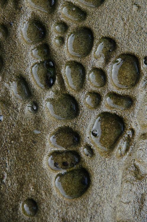 Eroded Sandstone, Tumbo Island, Gulf Islands National Park Reserve, British Columbia, Canada