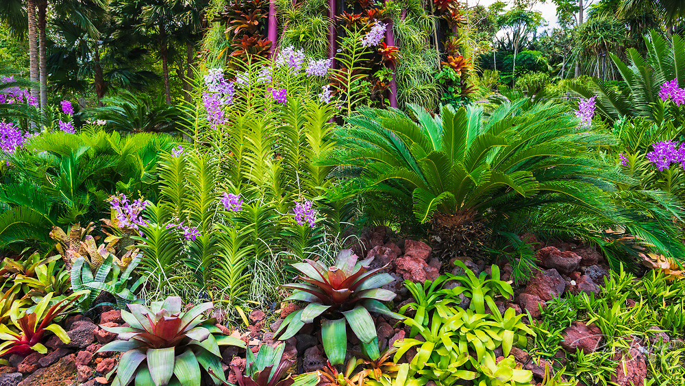 Orchids and succulents at the Supertree Grove at Gardens by the Bay, Singapore, Republic of Singapore