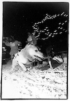 UP 200 Sled Dog Race, 1993 downtown Marquette, Michigan