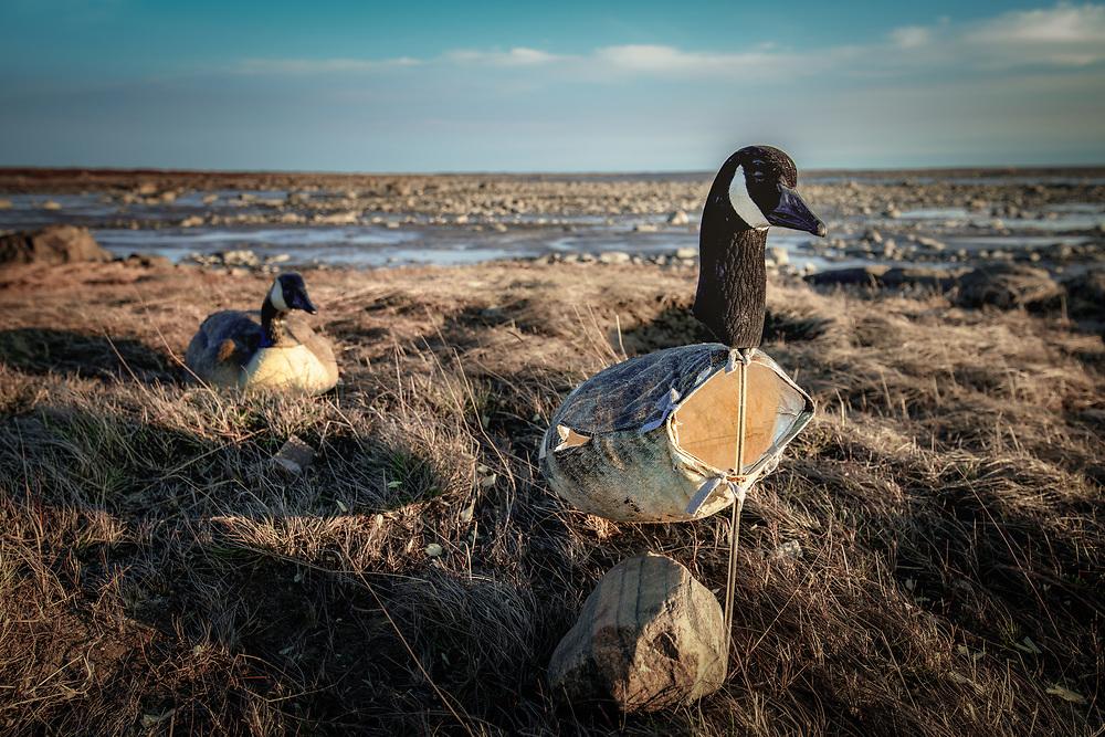 Fake goose for hunting at James Bay near Chisasibi, Quebec