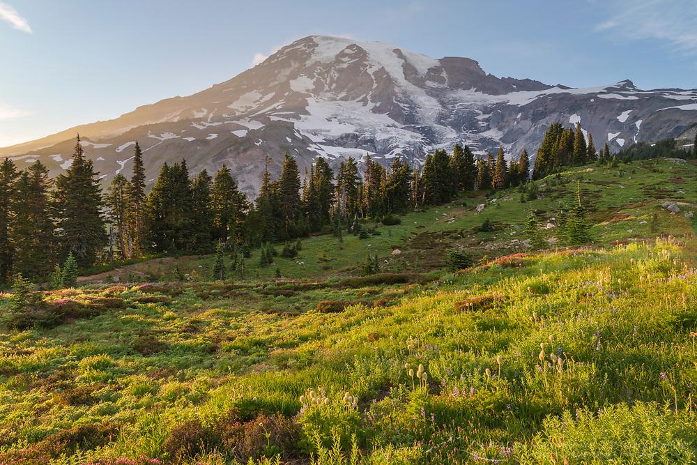 Mount Rainier Paradise Wildflower Meadows