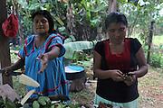 Pastora Quintero (left) and Emilia Martínez, Ngäbe women and members of COCABO, help prepare lunch for a co-op members meeting. COCABO: Valle de Agua Arriba, Almirante, Changuinola, Bocas del Toro, Panamá. September 1, 2012.