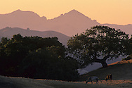 Morning light in the hills near Sheep Ridge, Santa Clara County, California