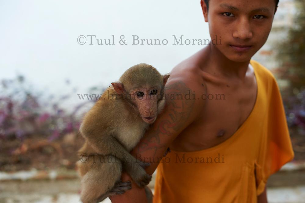 Laos, Province de Luang Prabang, ville de Luang Prabang, Patrimoine mondial de l'UNESCO depuis 1995, moine et son singe au temple Vat Pa Phai// Laos, Province of Luang Prabang, city of Luang Prabang, World heritage of UNESCO since 1995, monk and monkey at Wat Pa Phai temple