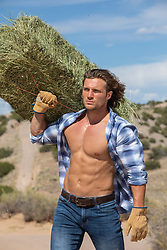 hot cowboy with open shirt carrying a bale of hay on a ranch