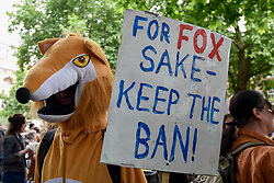 "© Licensed to London News Pictures. 29/05/2017. London UK. A demonstrator wearing a fox costume joins an ""Anti-Hunting March"" in central London, marching from Cavendish Square to outside Downing Street.  Protesters are demanding that the ban on fox hunting remains, contrary to reported comments by Theresa May, Prime Minister, that the 2004 Hunting Act could be repealed after the General Election.<br />  Photo credit : Stephen Chung/LNP"