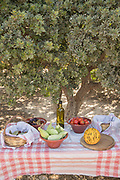 Table with local organic food: tomatoes, grapes, olive oil set under mastic tree (Pistacia lentiscus), Mesta, Chios, Greece
