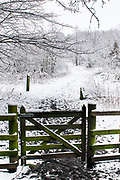 Scenes from around the Haining estate, Selkirk, where my studio is located The Haining, Selkirk, in the Scottish Borders.