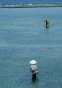 one man fishing with rod, another walking in shallows, waves breaking on reef in background. Sanur Beach, Bali, Indonesia