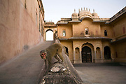 Monkeys play around the Nahargarh Fort, Jaipur, India<br /> The fort, built originally in 1734 by Maharaja Sawai Jai Singh II forms a defensive line above and around the city. Orginally called Sudarshangarh, it gradually became known as Nahargarh or 'abode of tigers'