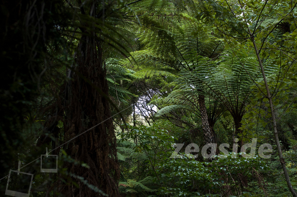 The rugged northern parts of Te Urewera feature dense North Island native forest. The relative remoteness and size of this forest and its isolated tracks make for an exceptional forest experience.