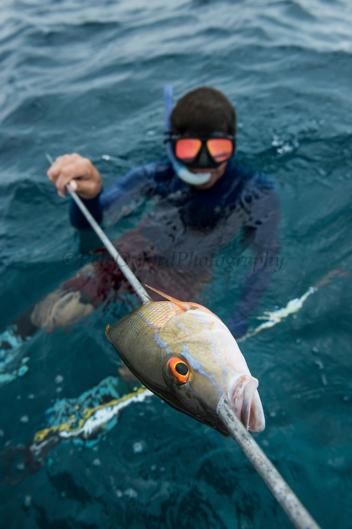 Spear fisher<br /> Caye Caulker<br /> Ambergris Caye<br /> Belize<br /> Central America