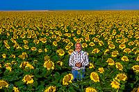 Farmer Gary Schields, Sunflower fields, Schields & Sons Farm, near Goodland, Western Kansas USA.