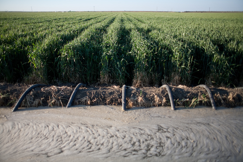 Flood irrigation in the San Joaquin Valley, April 18, 2009.  Flooding crops is innefficient in crop yield and water, conservation in comparison to drip irrigation.