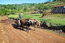 O Carro de boi ou carreta de bois, é um dos mais primitivos e simples meios de transporte, ainda em uso nos meios rurais, utilizado para o transporte de cargas (produtos agrícolas) e pessoas. FOTO: Jefferson Bernardes/Preview.com