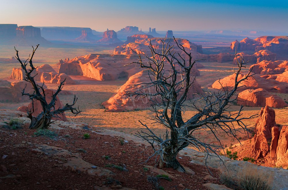 Dead tree on Hunt's Mesa in Monument Valley, AZ