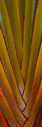 Design of Traveller's Palm tree