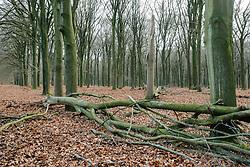 Planken Wambuis, Nieuw Reemst, Ede, Gelderland, Netherlands