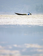 A shikara, a local wooden boat, with a woman farming Lotus root used in cooking. Lake Dal, Kashmir, India