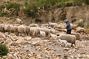 Ancoraimes. Young shepherd taking his flock to pasture.