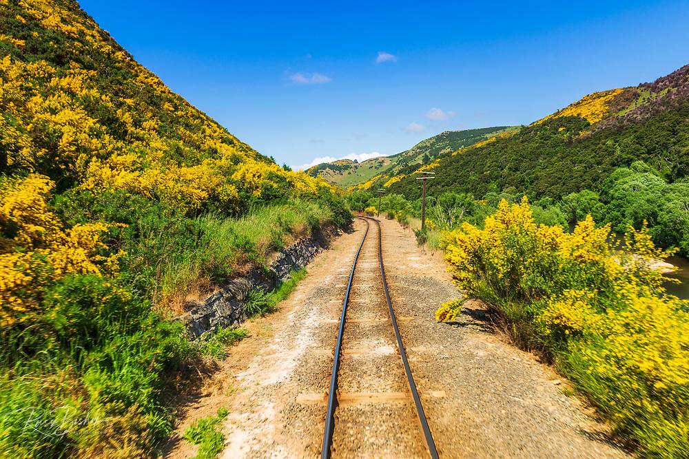 Wildflowers and track on the Dunedin Railways tour of the Taieri Gorge, Otago, South Island, New Zealand