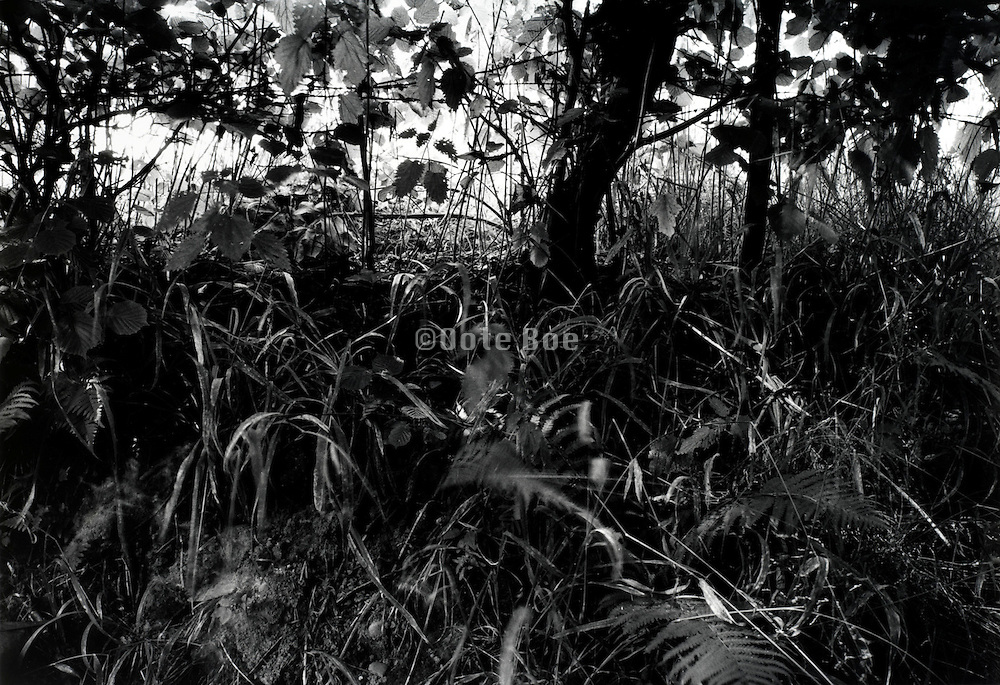 abstract view of small tree trunk with various grasses around it
