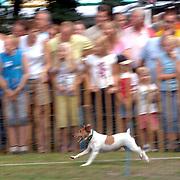 NLD/Lage Vuursche/20060819 - Houthakkersfeest 2006 Lage Vuursche, hondenrennen