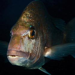Fish (Elasmobranchii & Teleostii)