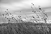 Weeds In The Wind