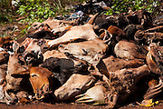 Sao Francisco de Sales_MG, Brasil...Lixao as margens da MG 255 em Sao Francisco Sales, Minas Gerais...A waste disposal near MG 255 in Sao Francisco Sales, Minas Gerais...Foto: LEO DRUMOND / NITRO