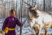 A Tsaatan boy leading his reindeer (Rangifer tarandus), Khovsgol Province, Mongolia
