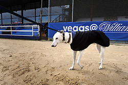 ©London News pictures. 17.02.2011. Retired greyhound Tom at Wimbledon Stadium. Iwan Thomas joins the Retired Greyhound Trust (RGT) today (Thurs)to highlight the plight of thousands of retired dogs needing homes. The trust currently has 1,000 dogs needing homes and a further 4,000 expected this year. The dogs only need two 20min walks a day Greyhound UK has teamed up with the RGT as its charity for the for the year. Picture Credit should read Stephen Simpson/LNP