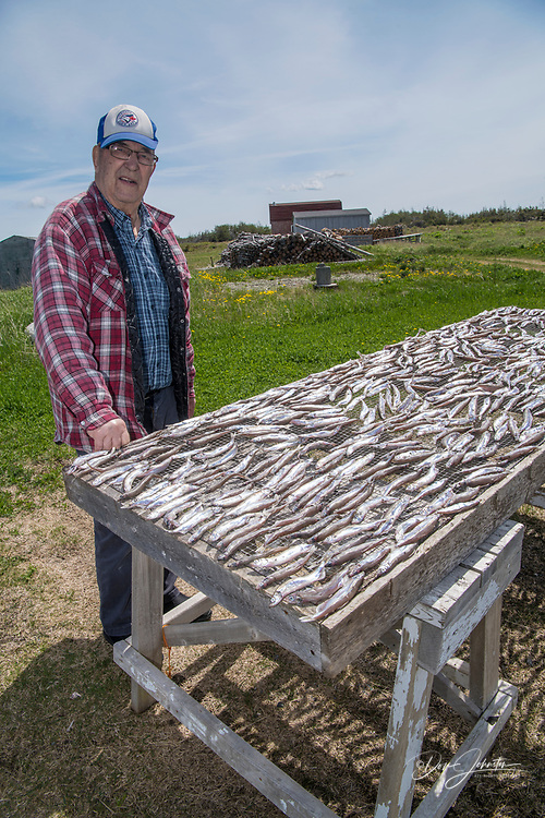 Raleigh resident and retired fisherman, Lister Green with his drying capelin, Raleigh, Newfoundland and Labrador NL, Canada