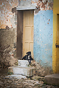 Dogs rule the houses and streets in all of Cuba, they all have poise and attitude!