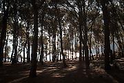 Sky and Pine Trees, Tamariu, Catalonia, Spain
