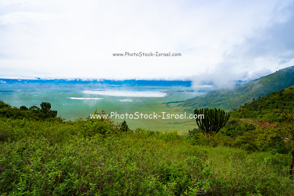 Ngorongoro Conservation Area, Tanzania. View of the crater