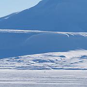 Polar Bear on Van Mijen Fjord
