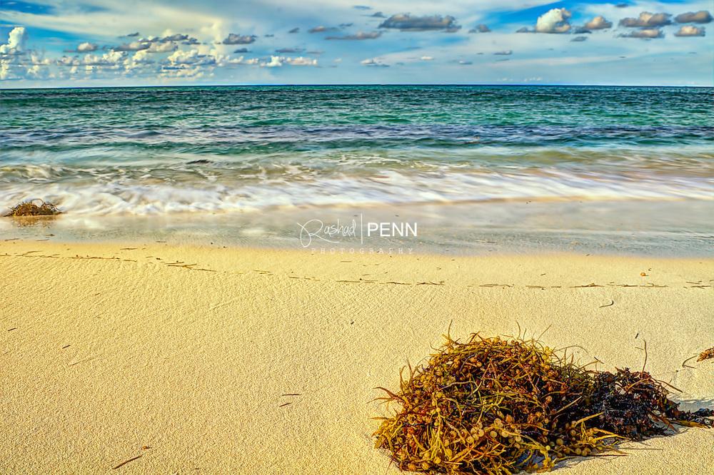 Sea weed washed ashore at Sandy Port Beach the Bahamas