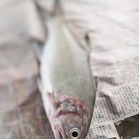 Moi, Threadfish