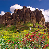 Springtime flowers bloom in the Superstition Mountains State Park in Arizona.