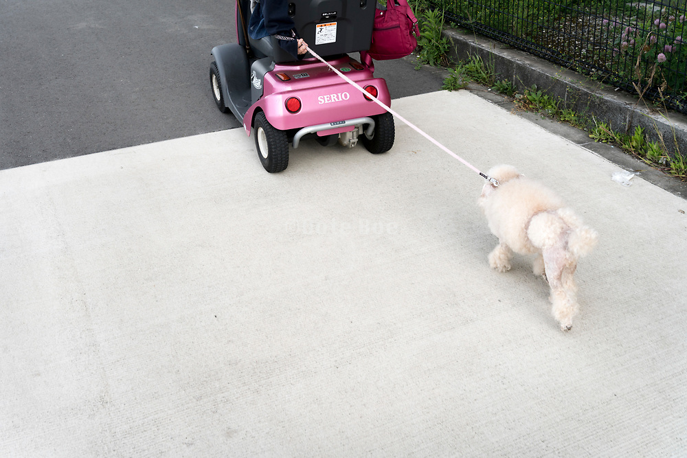 handicap person walking the dog with an electric wheelchair