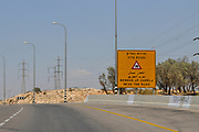 Beware of Camels sign. Photographed in the Negev Desert, Israel