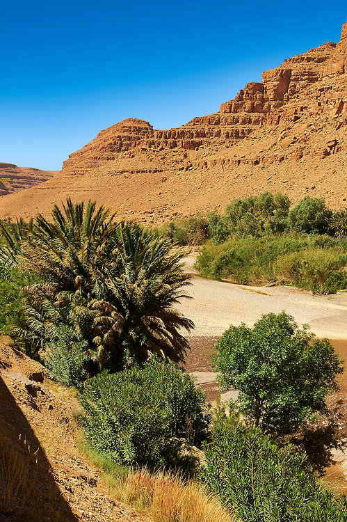 Palm trees growing in the river bed of the Ziz Gorge, Morocco .<br /> <br /> Visit our MOROCCO HISTORIC PLAXES PHOTO COLLECTIONS for more   photos  to download or buy as prints https://funkystock.photoshelter.com/gallery-collection/Morocco-Pictures-Photos-and-Images/C0000ds6t1_cvhPo