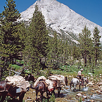 HORSE PACKING, Sierra Nevada, California. Dave Dohnel leads pack mules and horses in French Canyon, John Muir Wilderness.