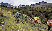 A trekker waits for loaded donkeys to pass in Yanajanca Valley, in the Cordillera Blanca, Andes Mountains, Peru, South America. Day 5 of 10 days trekking around Alpamayo, in Huascaran National Park (UNESCO World Heritage Site).